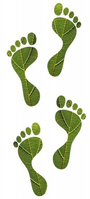 PART I – Environment, Sustainability and Organizations: Who Should StepUp?